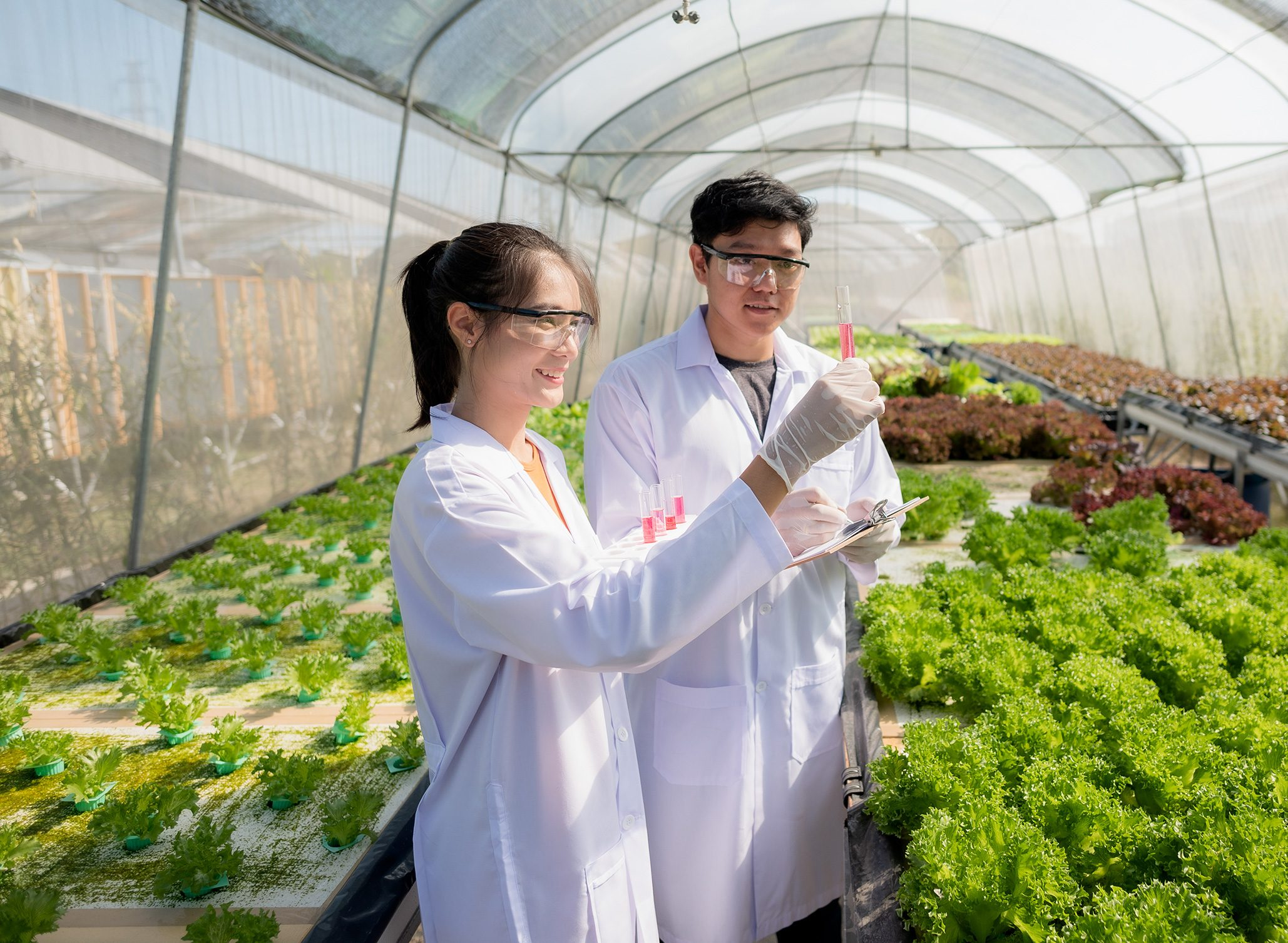 Two east-asian people in lab coats working in a poly tunnel